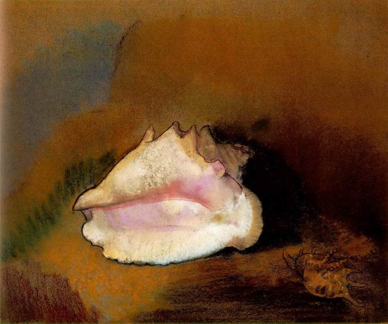 Redon.coquille